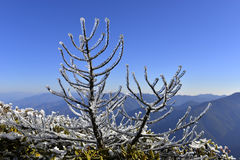 The plant of yushan national park. The plant with ice in yushan national park Royalty Free Stock Photos