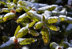 The plant of yushan national park. The plant with ice in yushan national park Stock Images