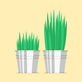 Plant in zinc pots flat icon Stock Photography