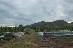 plantação fotografia de stock