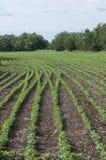 plantação Imagem de Stock