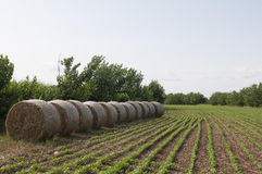 plantação Imagens de Stock Royalty Free