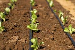 Plantação Foto de Stock Royalty Free