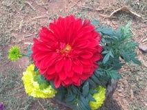 plantação Imagem de Stock Royalty Free