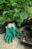 Plantação da mola Foto de Stock Royalty Free