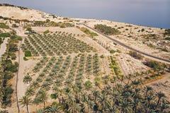 Plantação da opinião superior de palmas de data, vista aérea As palmas de data têm um lugar importante em agricultura avançada do imagens de stock