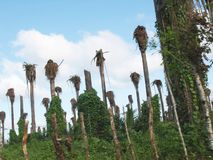 Plantação da palma fotografia de stock royalty free