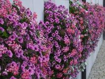 Plantação da soleira Imagem de Stock Royalty Free