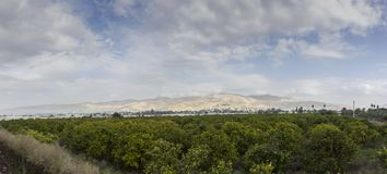 Plantação das árvores alaranjadas com frutos maduros em Jordan Valley foto de stock royalty free