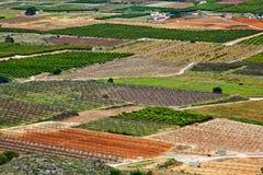 Plantação das árvores de fruto Fotos de Stock Royalty Free