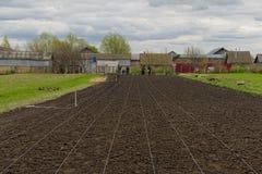 Plantação das batatas Imagens de Stock Royalty Free