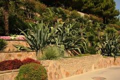 Plantação das hortaliças Fotografia de Stock Royalty Free