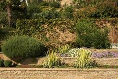 Plantação das hortaliças Imagem de Stock Royalty Free