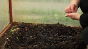 Plantação das sementes à mão filme