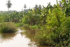 Plantação de banana na cidade de Humpi, Índia, Karnataka Produção alimentar orgânica da exploração agrícola Foto de Stock