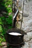 Plantação de borracha Imagem de Stock Royalty Free