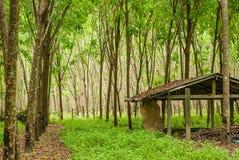 A plantação de borracha e abonden a casa fotos de stock royalty free