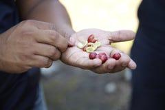 Plantação de café, Boquete, Panama3 Imagens de Stock Royalty Free