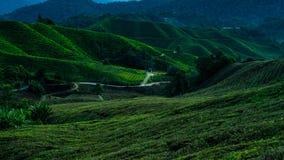 Plantação de Cameron Highlands Tea durante o nascer do sol fotografia de stock