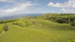 Plantação de chá aérea da metragem em Cha Gorreana, Maia, San Miguel, Açores, Portugal filme