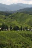 Plantação de chá asiática Imagem de Stock Royalty Free