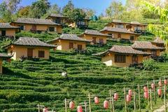 Plantação de chá Baan Rak tailandês em Tailândia foto de stock