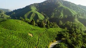 Plantação de chá de Boh, paisagem bonita em Cameron Highlands fotografia de stock royalty free