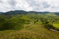 Plantação de chá de Cameron Highlands Bharat fotos de stock