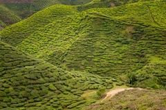 Plantação de chá de Cameron Highlands Bharat fotografia de stock