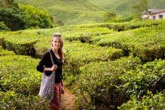Plantação de chá de Cameron Highlands Bharat imagem de stock royalty free