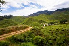 Plantação de chá de Cameron Highlands Bharat foto de stock