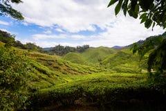 Plantação de chá de Cameron Highlands Bharat foto de stock royalty free