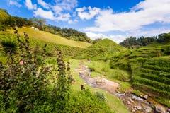 Plantação de chá de Cameron Highlands Bharat imagens de stock