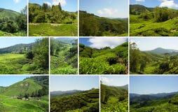 Plantação de chá, Cameron Highlands, Malásia foto de stock