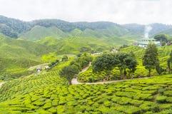 Plantação de chá de Bharat Foto de Stock Royalty Free