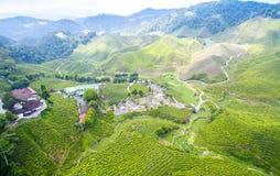 Plantação de chá de Bharat Green imagens de stock
