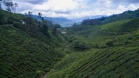 Plantação de chá de BOH em Cameron Highland Fotos de Stock