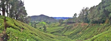 Plantação de chá de Cameron Highlands imagem de stock