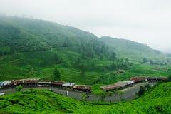 Plantação de chá de Puncak Foto de Stock