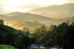 Plantação de chá de Sungai Palas imagens de stock royalty free