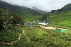 Plantação de chá do nd da vila imagem de stock