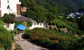 Plantação de chá em Hangzhou Foto de Stock Royalty Free