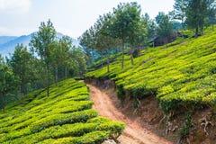 Plantação de chá em Munnar, Kerala, Índia Imagem de Stock Royalty Free