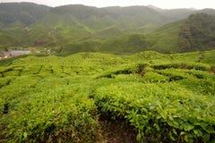 Plantação de chá, montanhas de Cameron fotografia de stock royalty free