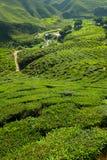 Plantação de chá na montanha - Cameron Highlands Fotografia de Stock Royalty Free