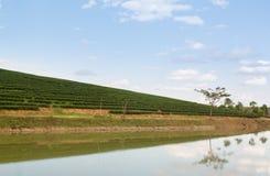 Plantação de chá na montanha com lagoa e o céu azul Imagens de Stock