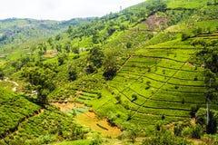 Plantação de chá nas montanhas de Nuwara Eliya, Sri Lanka Fotografia de Stock Royalty Free