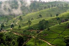 Plantação de chá verde em Nuwara Eliya, Sri Lanka nas montanhas fotos de stock