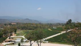 Plantação de Choui Fong Tea em Doi Mae Salong Mountain em Chiang Rai, Tailândia video estoque
