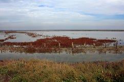 A plantação de sal Fotos de Stock